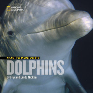 Face to Face with Doliphins - Nicklin