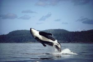 What Are Cetaceans?