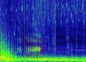 Humpback Singing 280 x 200